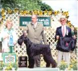 Westley - Number 1 2005 Giant Schnauzer