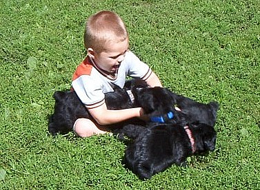 Hunter with Giant Schnauzer pups
