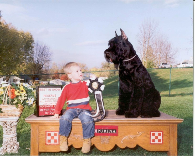 Lucas and Hunter at the Giant Schnauzer show